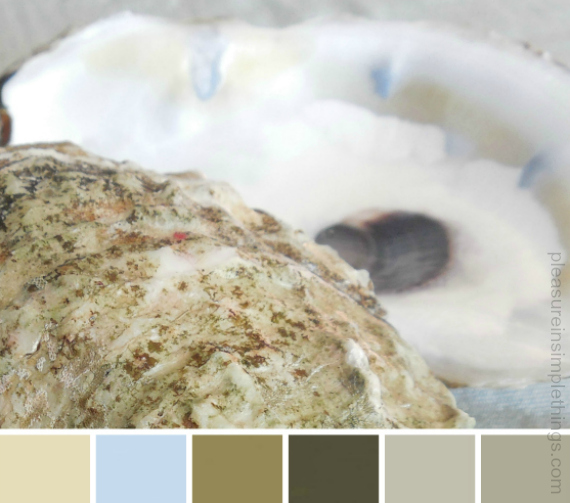 The color palette I created for my downstairs rooms from a photo I took of an oyster shell.  I color matched my paint colors to the colors I took from the photo.